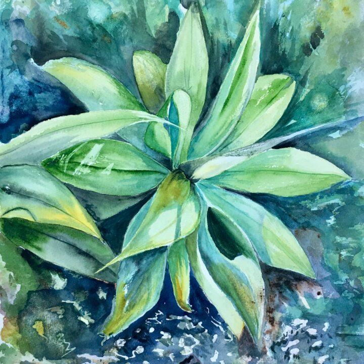 Yuccaplant